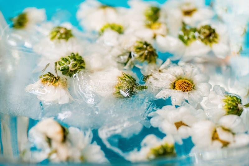 浮动花在水,特写镜头中 库存照片
