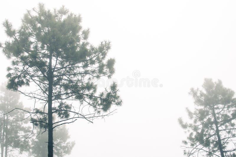 浮动雾 免版税库存图片