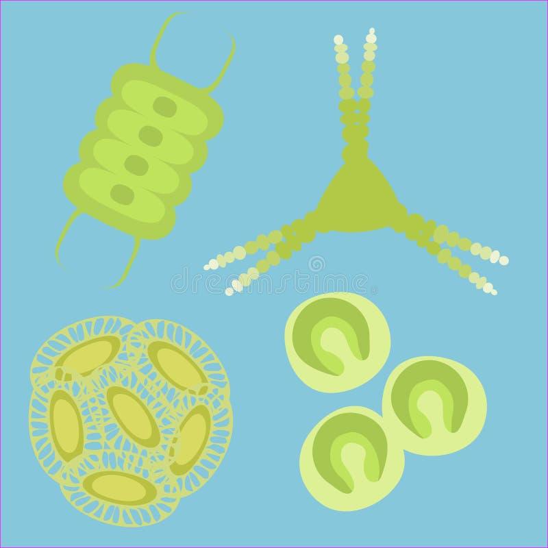 浮游植物小有机体 库存例证