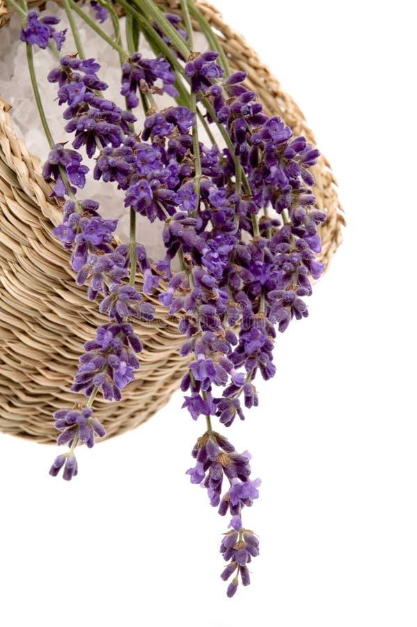浴淡紫色 库存图片