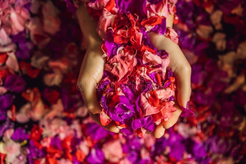 浴的可爱的年轻女人与热带花和芳香油的瓣 皮肤回复的温泉治疗 免版税库存图片
