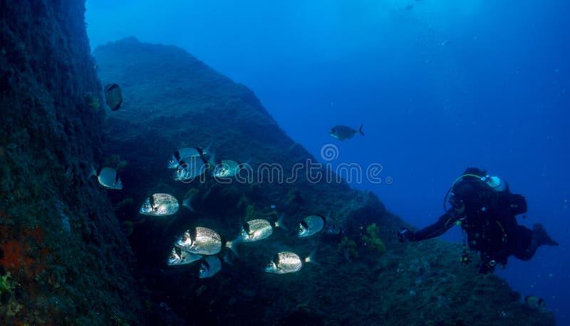 海â€与许多鱼的‹底部 免版税库存照片