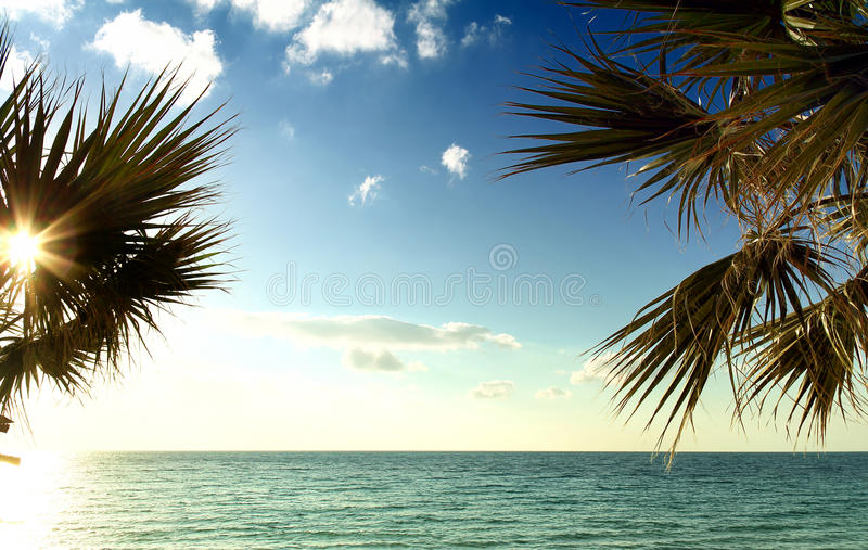 海、太阳、天空和棕榈树 免版税库存照片
