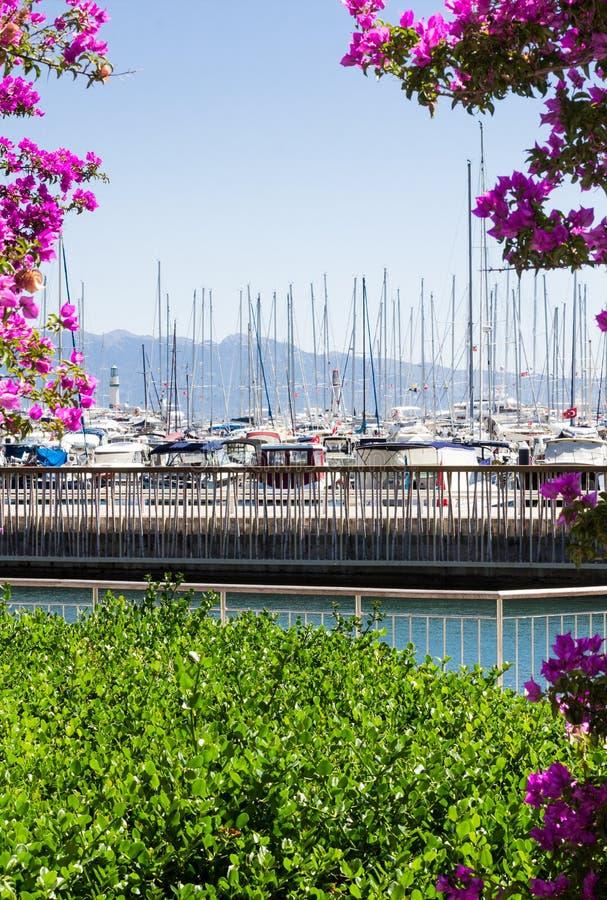 海和小游艇船坞 免版税图库摄影
