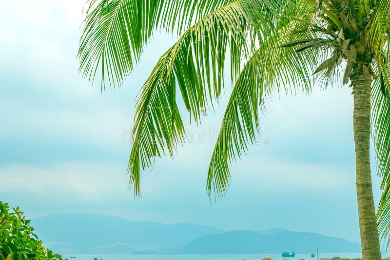 海和山的背景的帕尔马 免版税库存照片