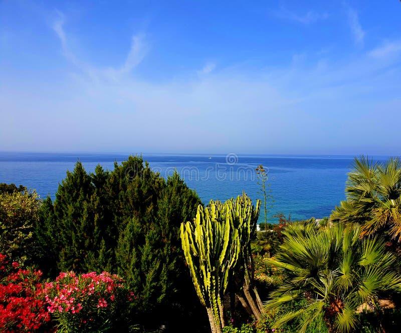 海和植物 免版税库存图片