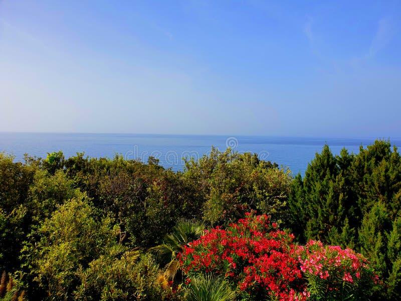 海和植物 库存图片