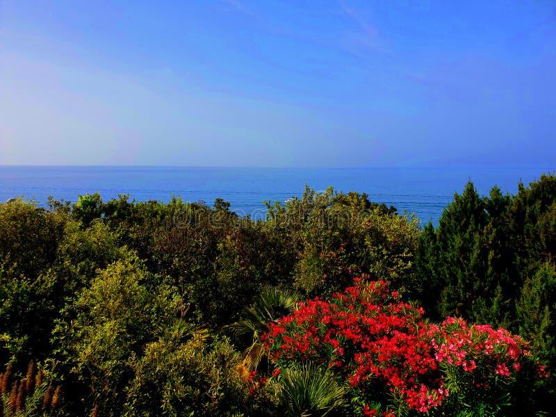 海和植物 库存照片