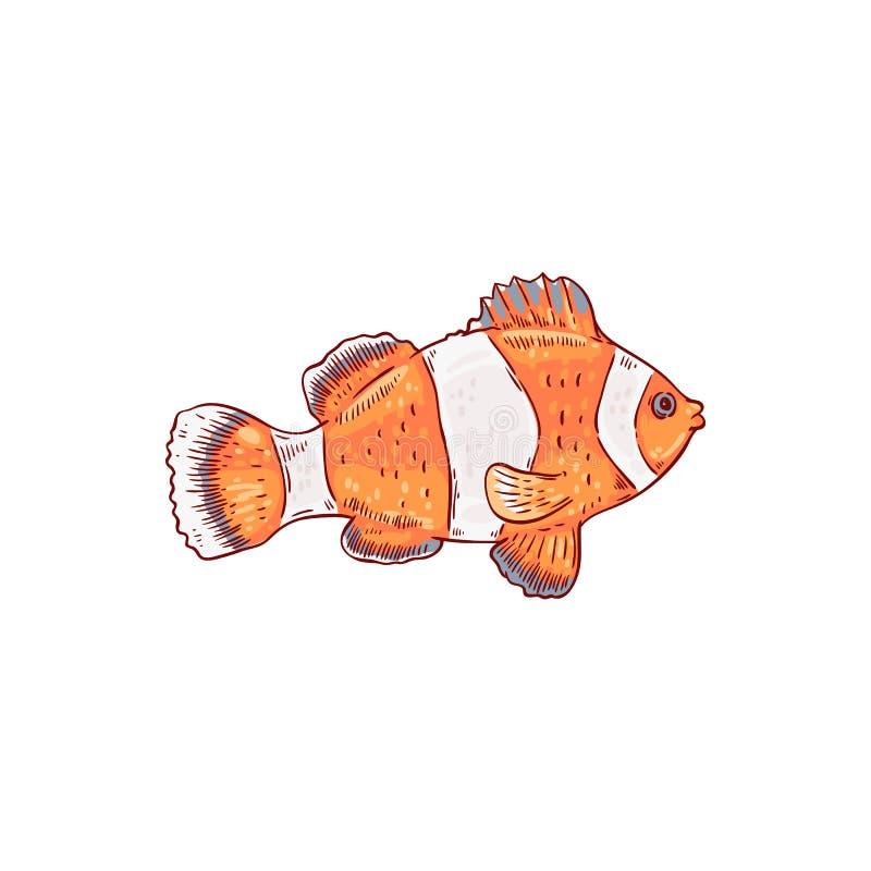海和海洋橙色和白色镶边clownfish 库存例证