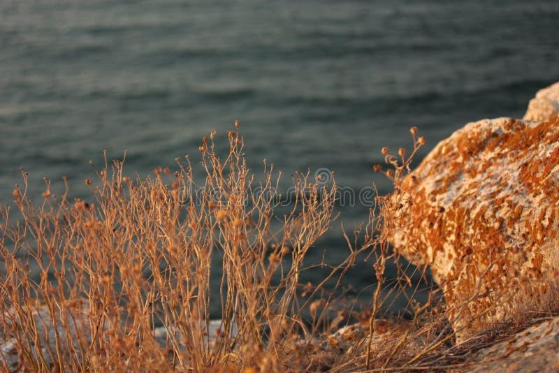海和草在金子日落 免版税库存图片