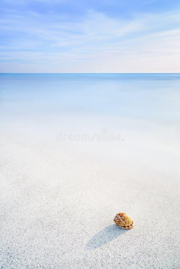 海在一个白色热带海滩的软体动物壳在蓝天下 免版税库存照片