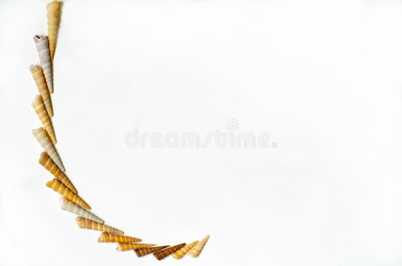 海在所有白色背景的壳样式 免版税图库摄影
