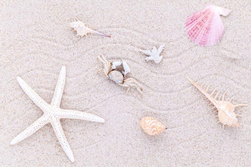 海壳、海星和螃蟹在海滩沙子为夏天 图库摄影