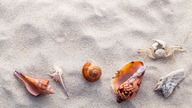 海壳、海星和螃蟹在海滩沙子夏天和海滩的 免版税库存照片