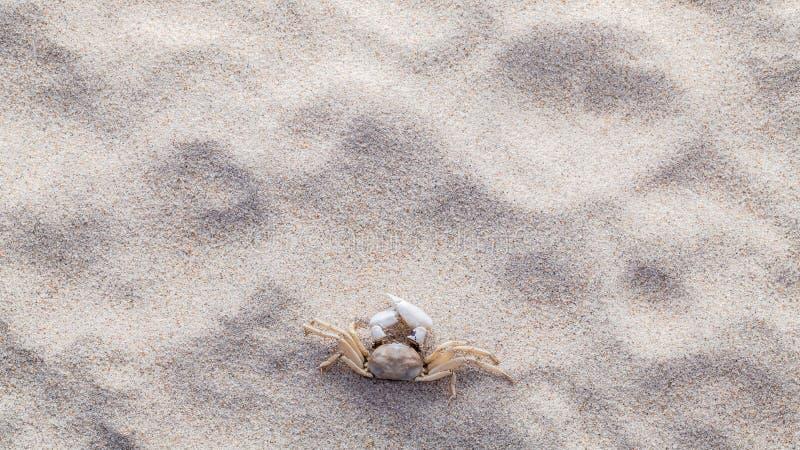 海壳、海星和螃蟹在海滩沙子夏天和海滩的 免版税库存图片