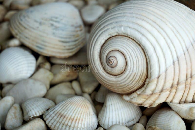 海壳和小石头在海滩 免版税库存照片