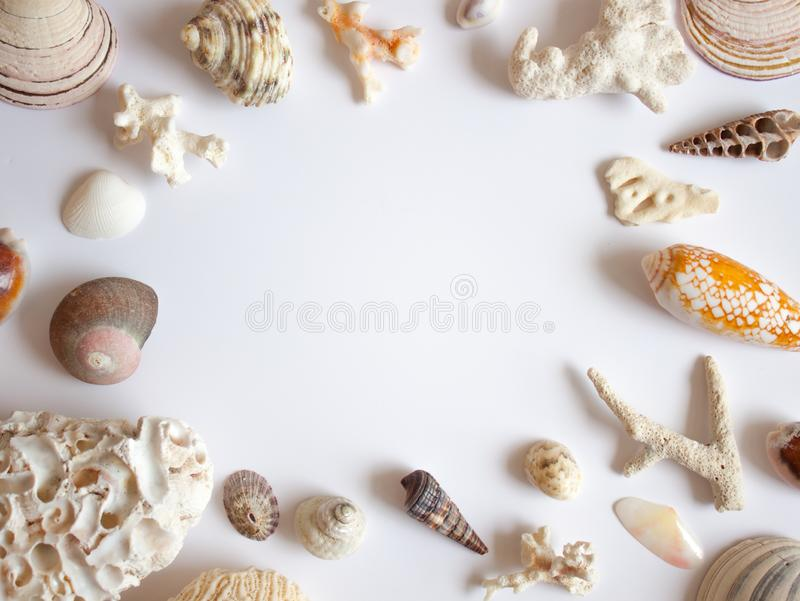 海壳和珊瑚框架 库存照片