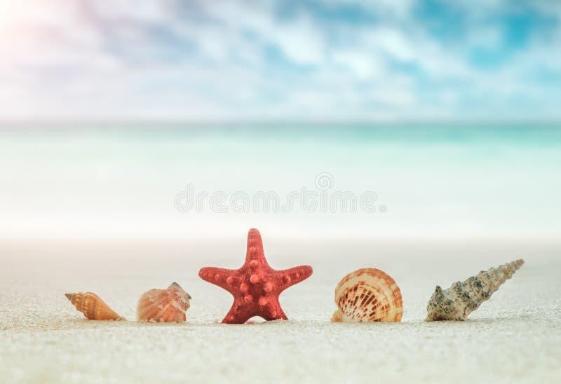 海壳和红色海星在沙滩在天蓝色的海和天空蔚蓝被弄脏的背景与白色云彩,假期假日co 免版税库存照片