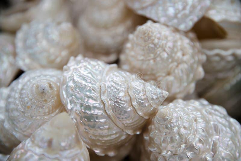 海壳品种从海滩的-全景-与大扇贝壳 免版税库存图片