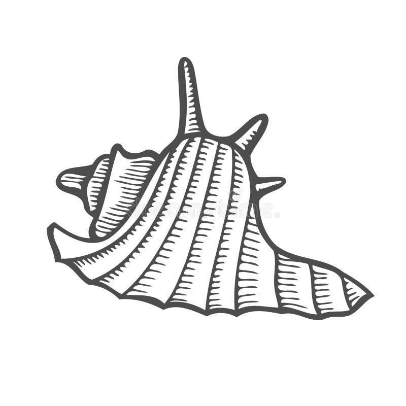海壳扇贝 皇族释放例证
