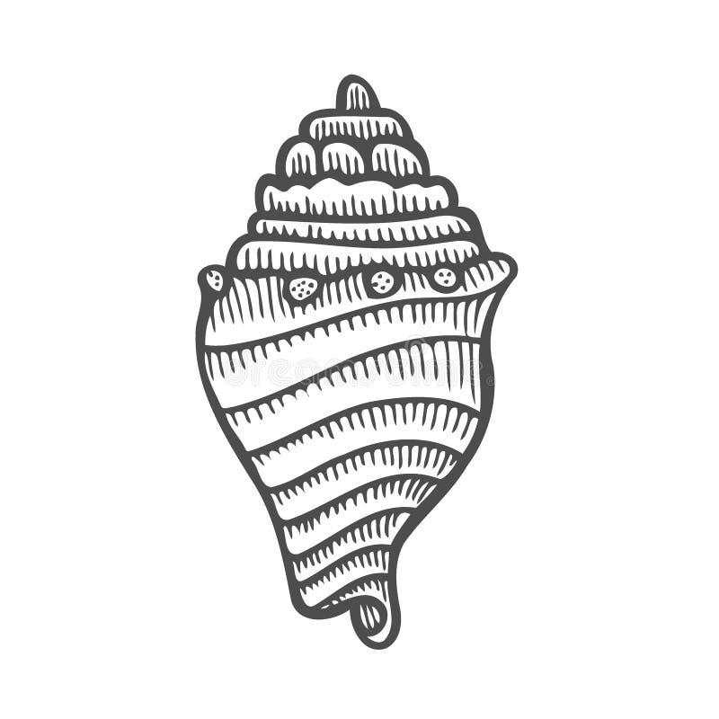 海壳扇贝 向量例证