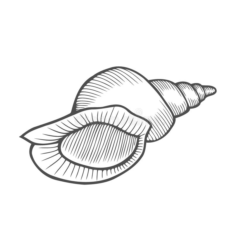 海壳扇贝 库存例证