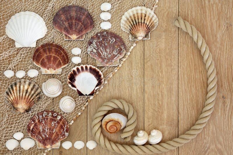 海壳摘要 库存照片
