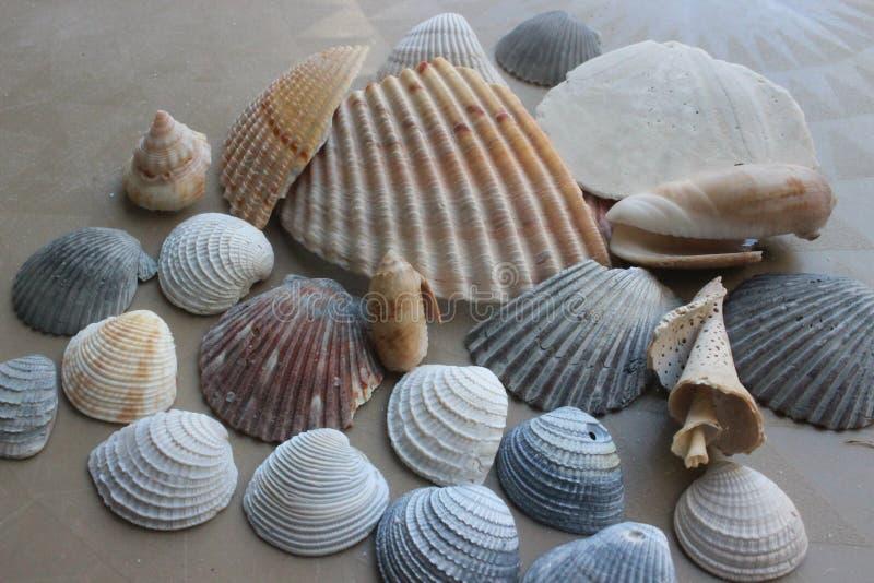 海壳汇集 库存图片