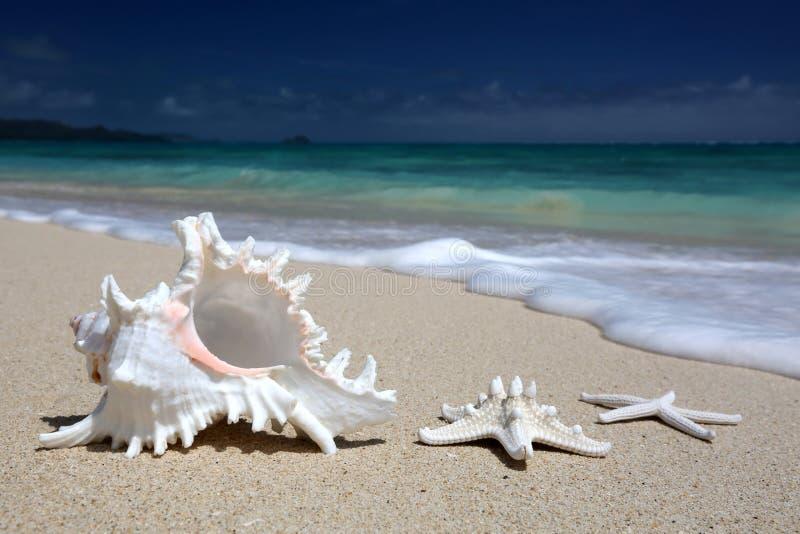 海壳海星沙滩绿松石海洋夏威夷 免版税库存照片