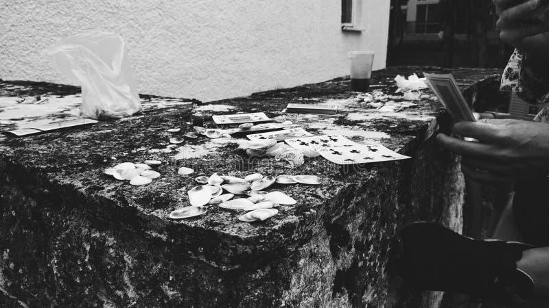 海壳的啤牌 免版税库存图片