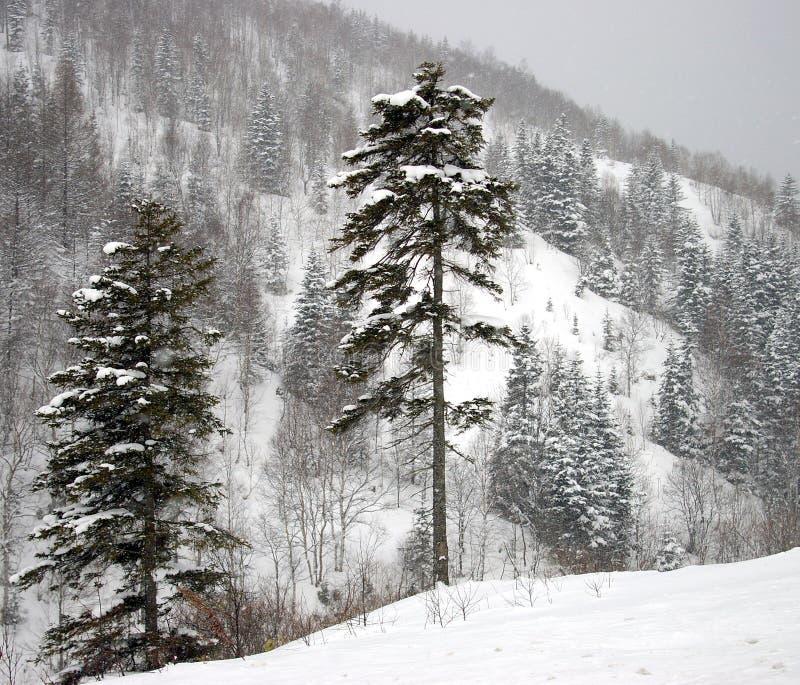 海岛山萨哈林岛降雪 免版税库存照片