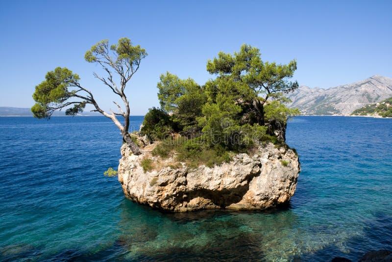 海岛杉木岩石结构树 免版税库存照片