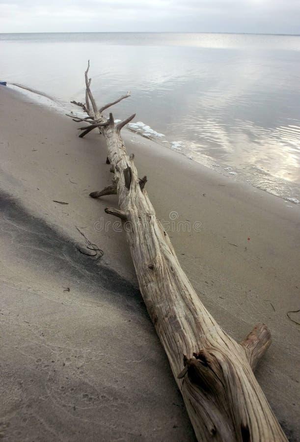 海岛海滩国家公园 英里沙丘 库存照片
