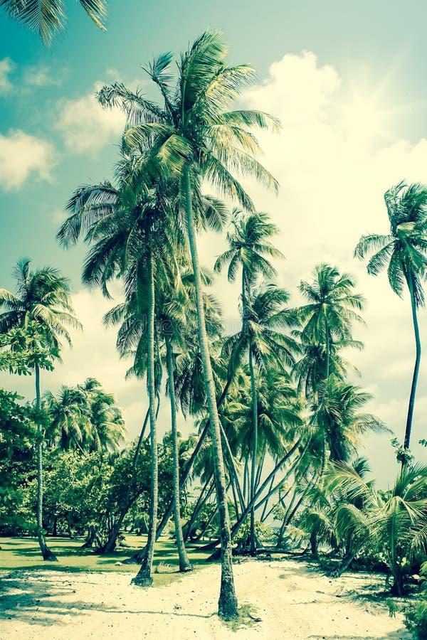 海岛热带的棕榈树 库存图片