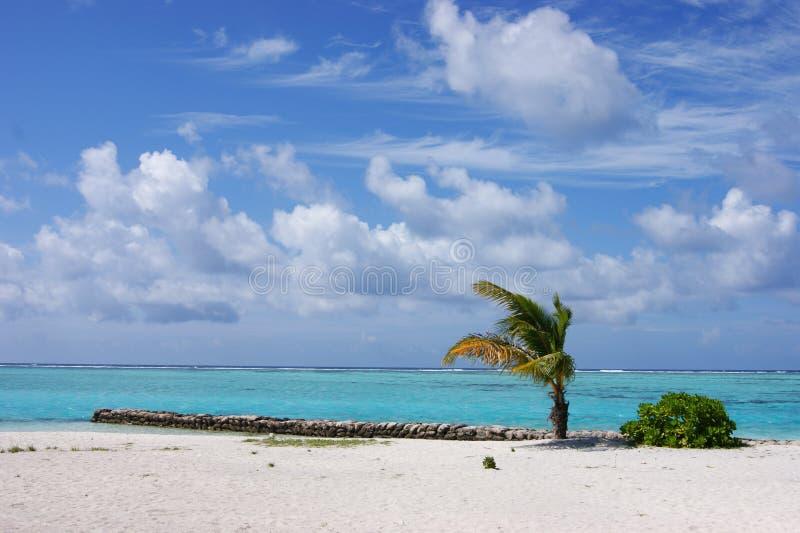 海岛马尔代夫 库存图片