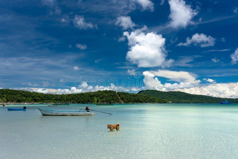 海岛鱼的狗狩猎在绿松石净水 免版税库存图片