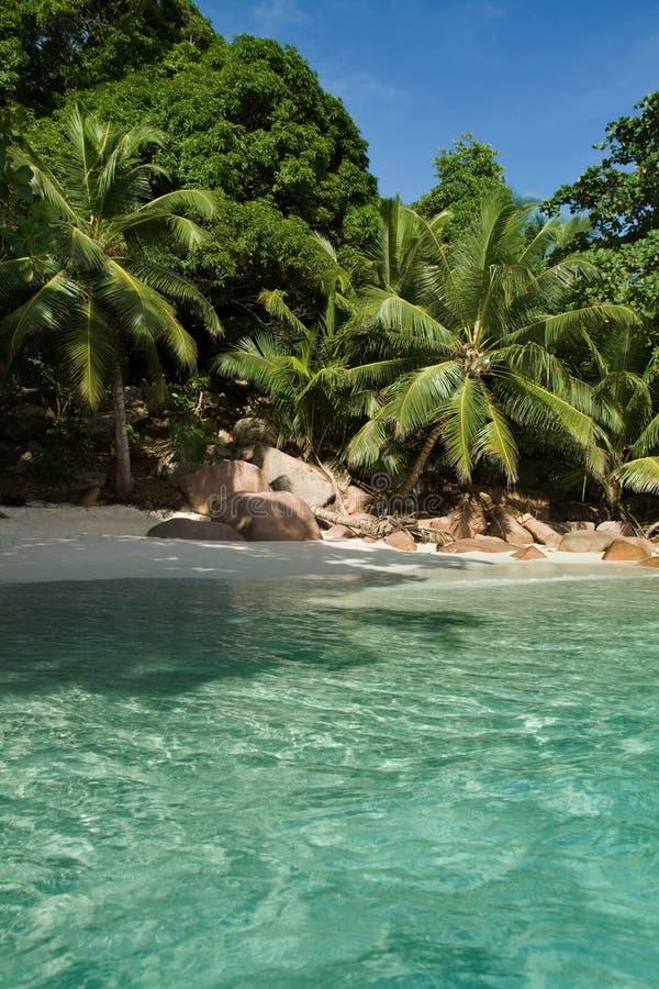 海岛praslin塞舌尔群岛 免版税库存照片
