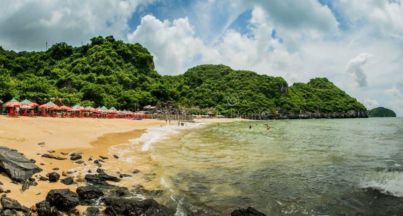 海岸吉婆岛猫二氧化碳  免版税图库摄影