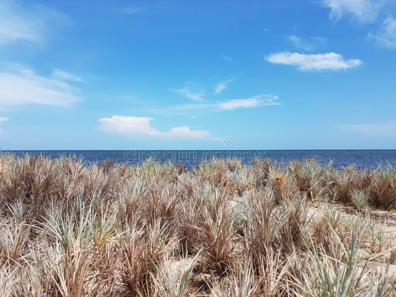 海岸地区 免版税图库摄影