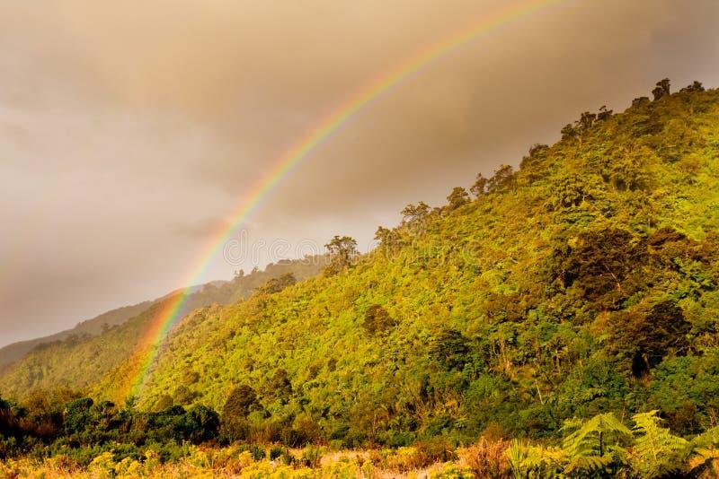 海岸山麓小丘在西方的彩虹的森林nz 免版税库存图片