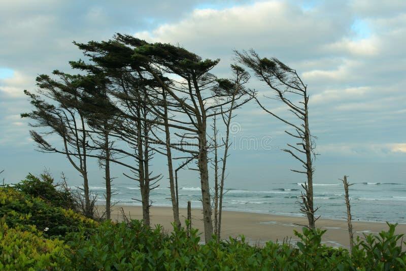 海岸标志俄勒冈结构树 库存照片