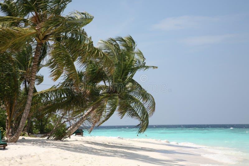 海岸海洋棕榈树 免版税库存照片