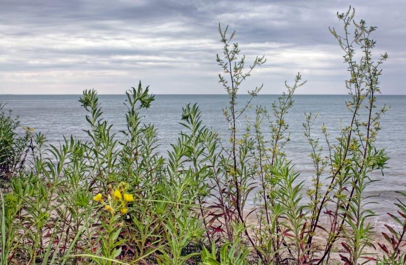 海岸线休伦湖湖 库存照片