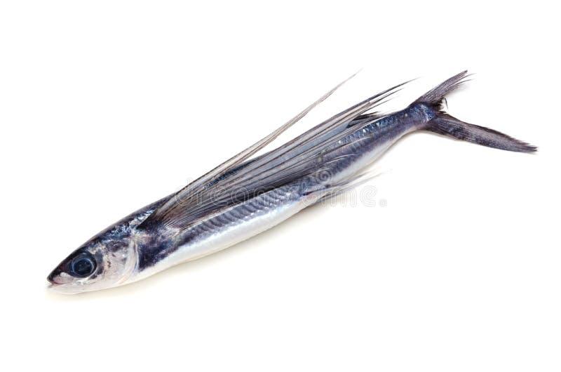 海岸鱼飞行 免版税库存照片