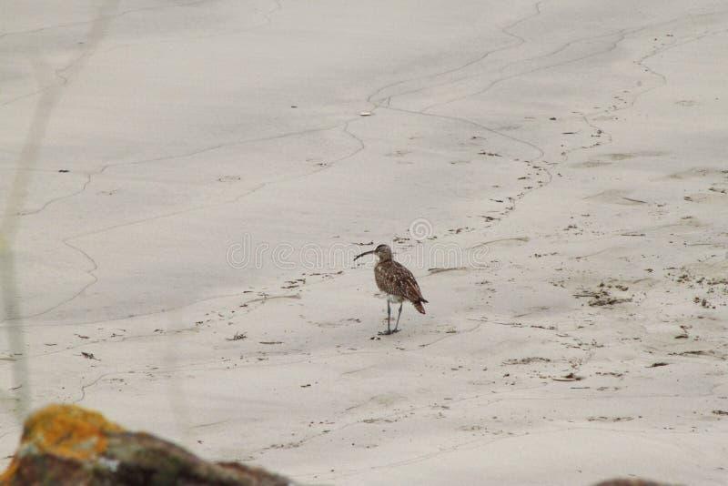 海岸鸟 库存照片