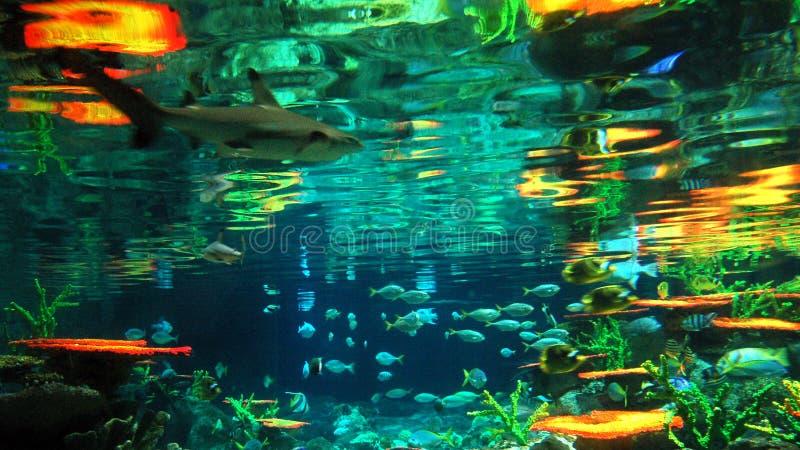 海底 库存照片