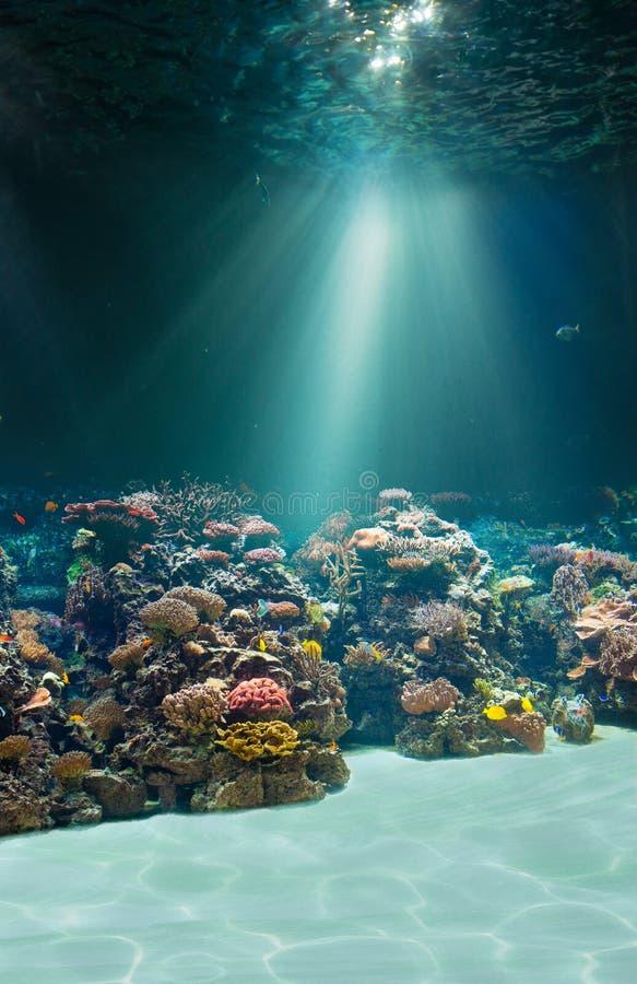 海或海洋水中海底 免版税图库摄影