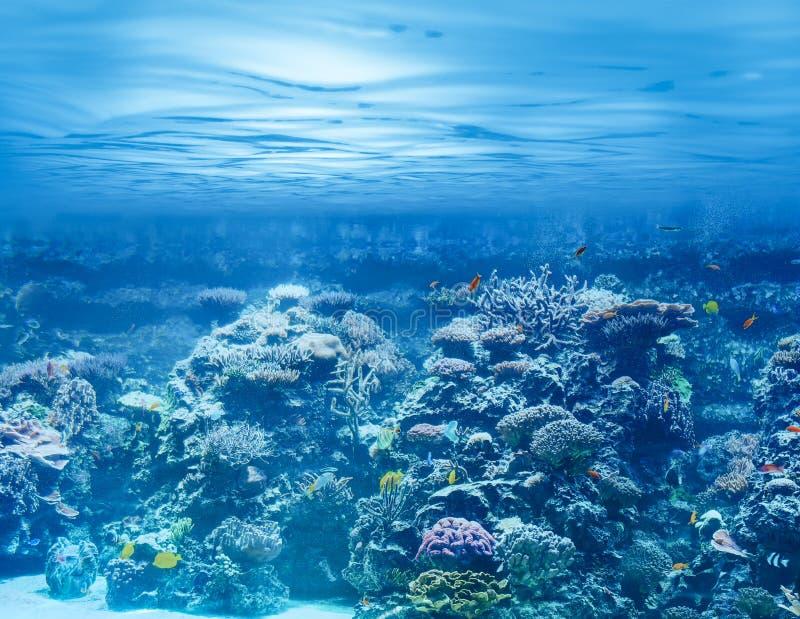 海或海洋水下与珊瑚礁和回归线 图库摄影