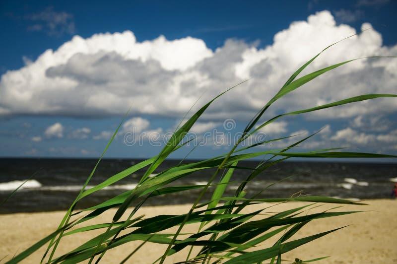 海或海洋的岸 免版税图库摄影