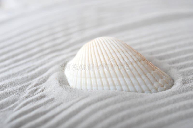 海扇壳沙子海运 免版税库存图片